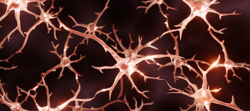 Exercise promotes neuroplasticity