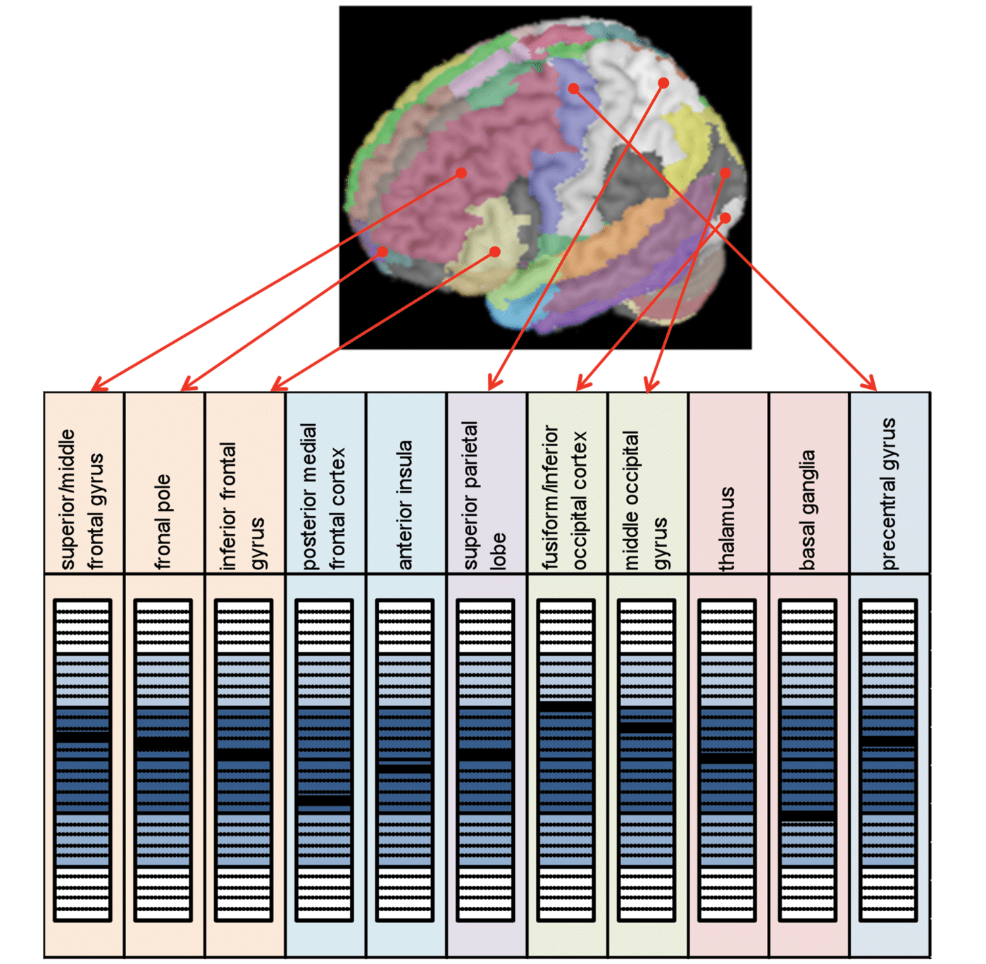 Normative Atlas for concussion neromarkers