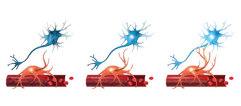 A representation of neurovascular coupling.