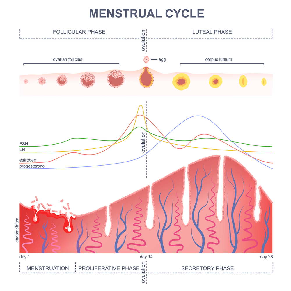 Post-concussion syndrome menstrual cycle changes are common. Learn more about what happens to your cycle after a brain injury and what you can do about it