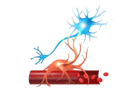 Neurovascular Coupling