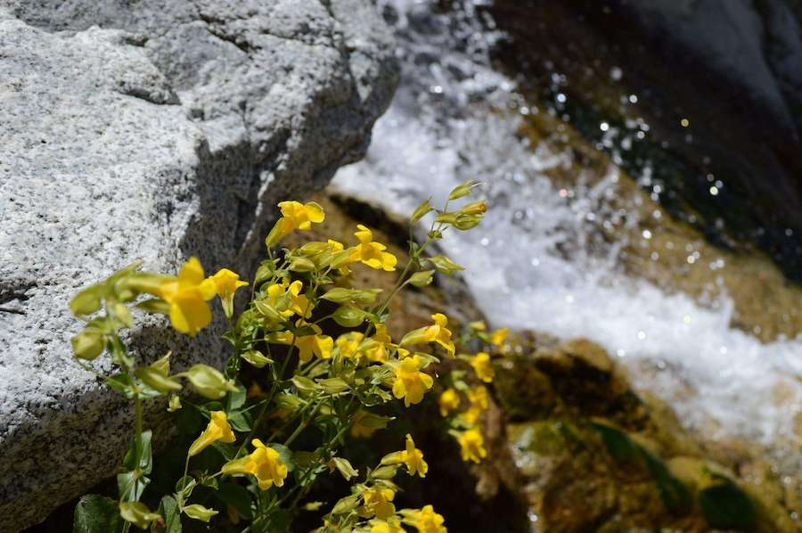 The flowers atop Lisa Falls.