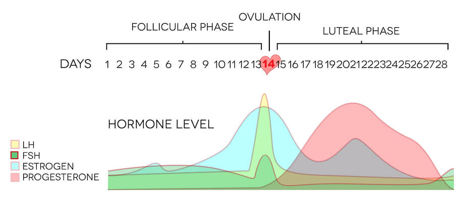 Female ovulation: follicular phase vs luteal phase and hormone levels.