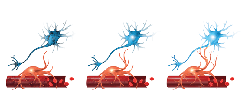 A figure that shows what neurovascular coupling is.