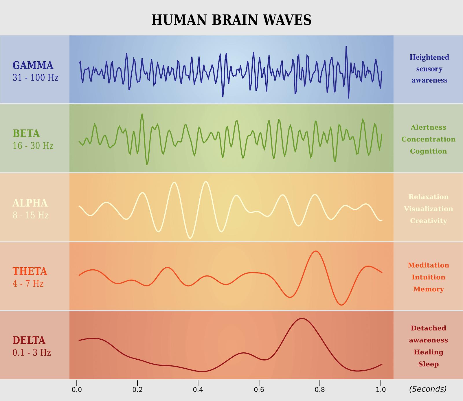 Human brain waves: Gamma (31-100 Hz), Beta (16-30 Hz), Alpha (8-15 Hz), Theta (4-7 Hz), Delta (0.1-3 Hz)