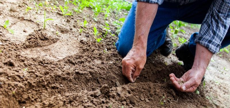 A man is gardening