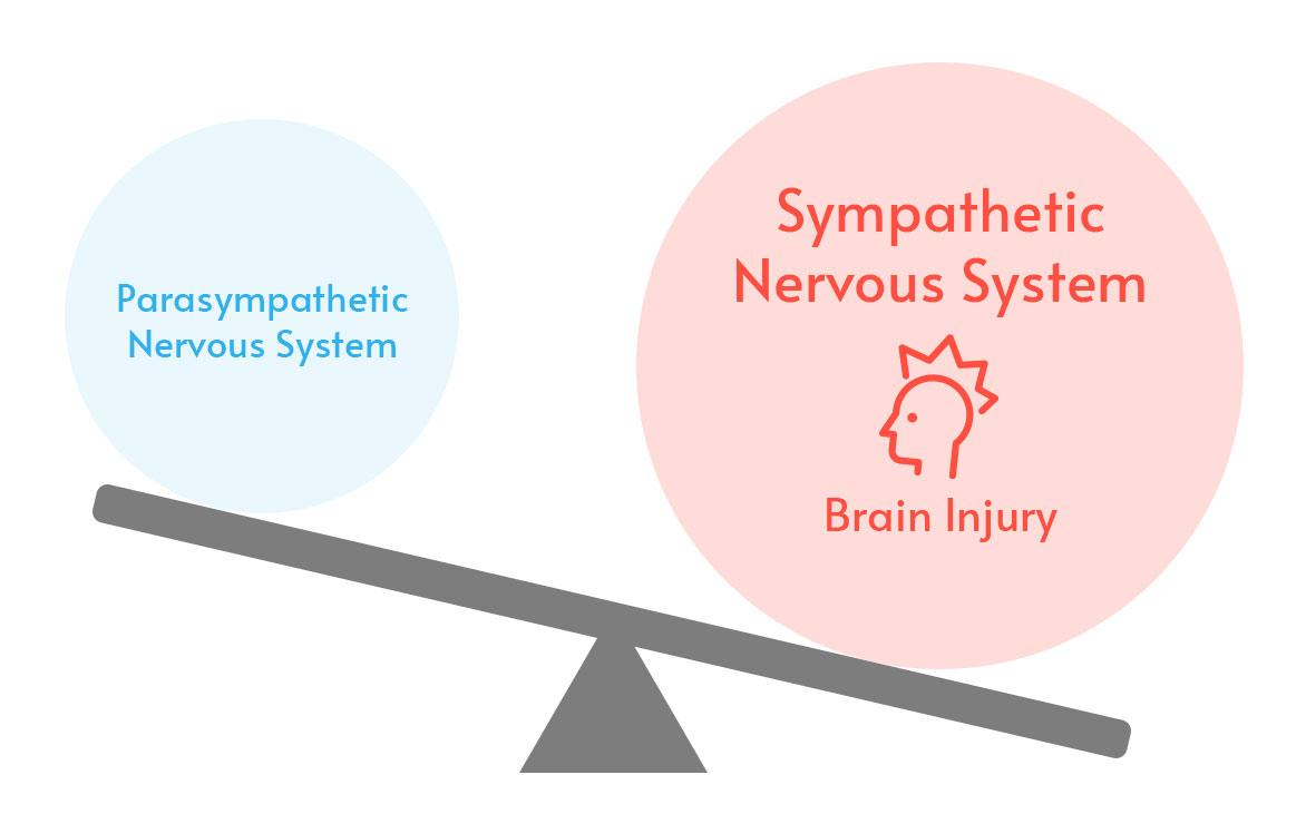 Parasympathetic Nervous System vs Sympathetic Nervous System