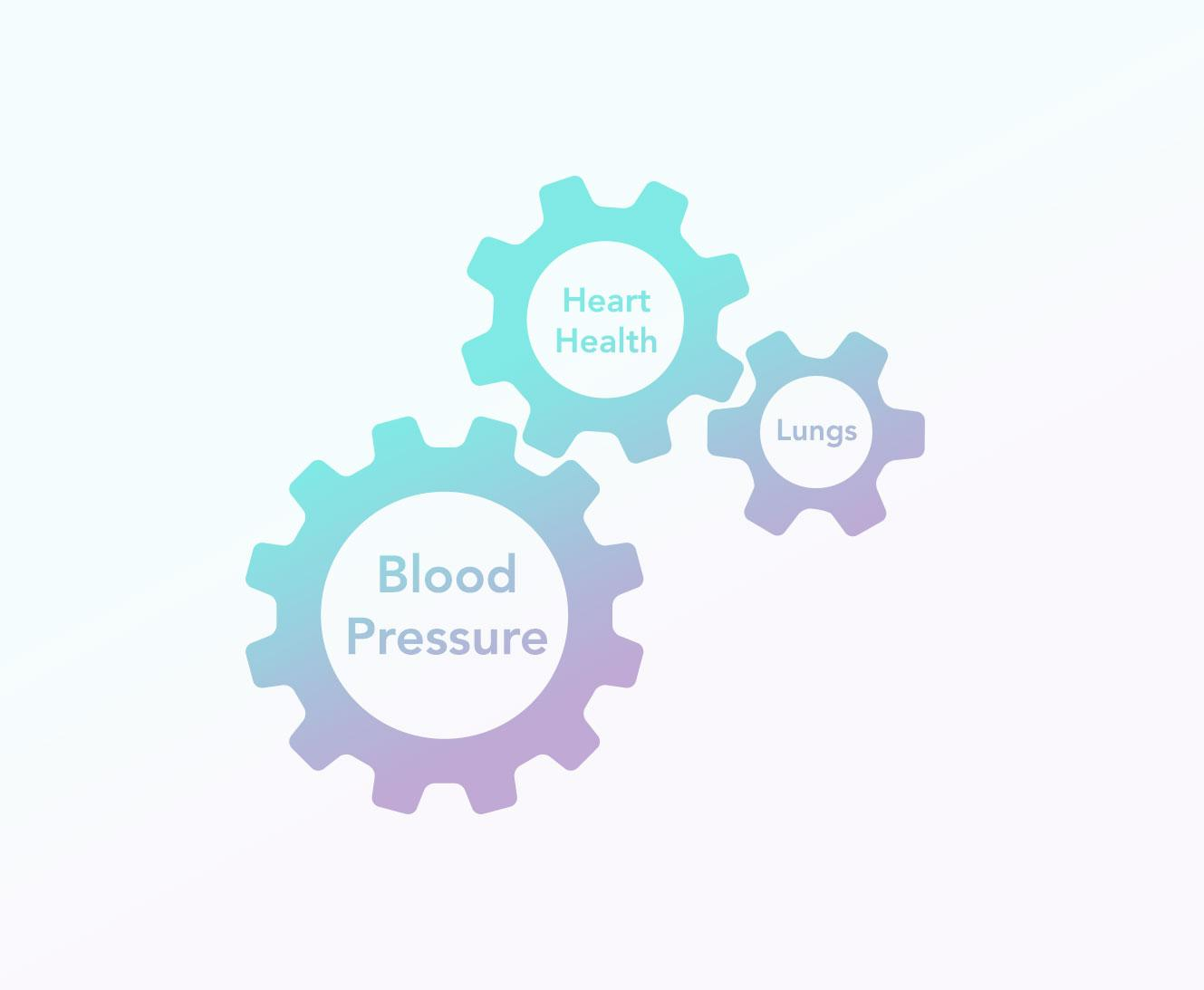 Blood Pressure, Heart Health and Lungs