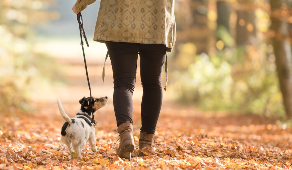 A woman is out for a walk with her dog.