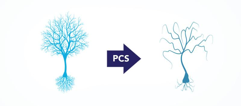 A diagram showing what PCS looks like.