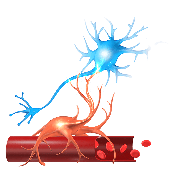 What is NeuroVascular Copling (NVC)