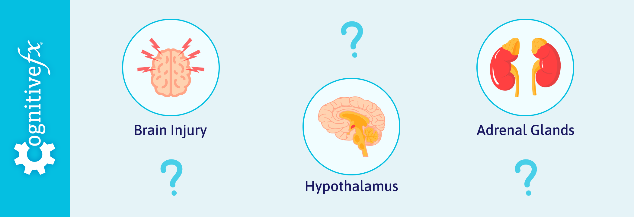 How a Brain Injury Can Cause Hormone Dysregulation (And What to Do About It)